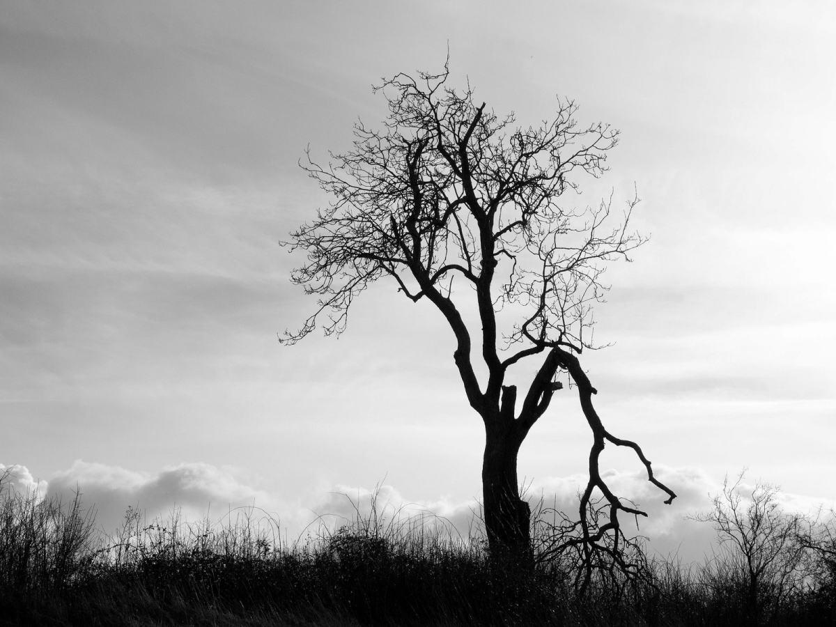 The Broken Branch